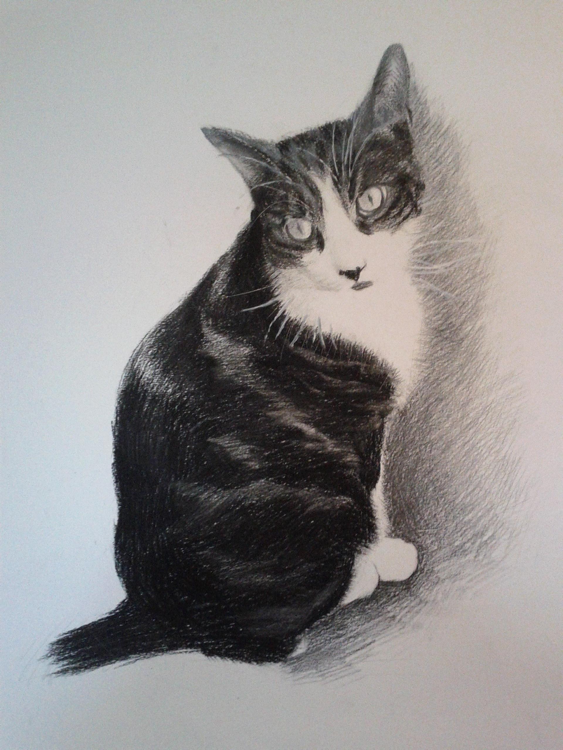 动物铅笔画画猫